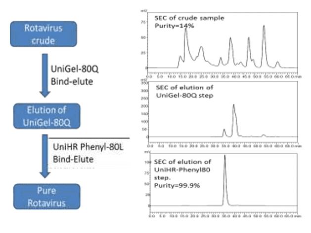 HIC Polish Purification of Rotavirus Using UniHR Phenyl-80L Resin