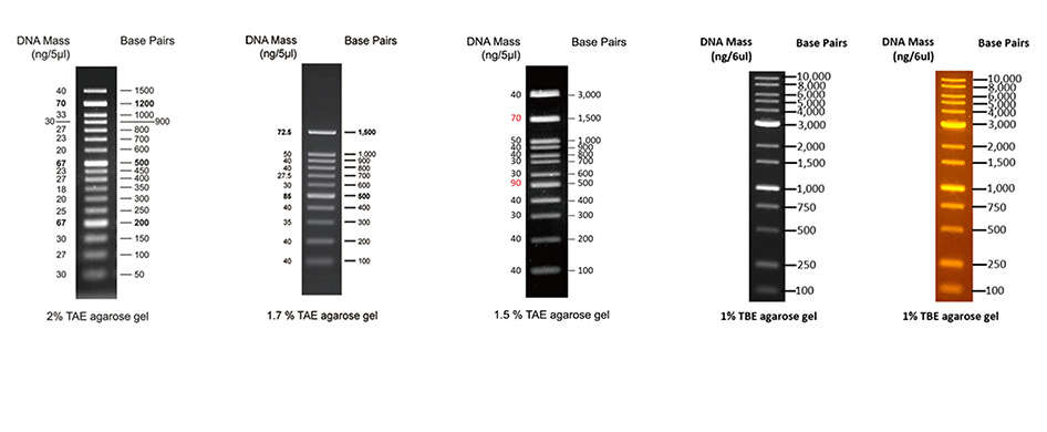 DNA Ladders Benefits