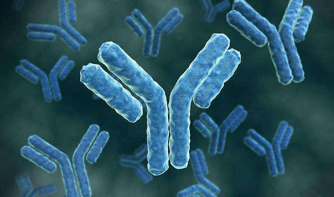 IHC Guaranteed Antibodies