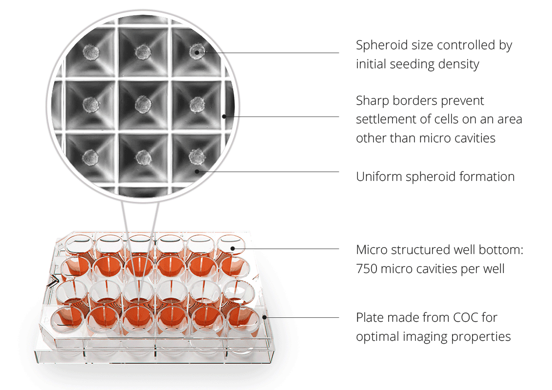The 3D Cell Culture Revolution